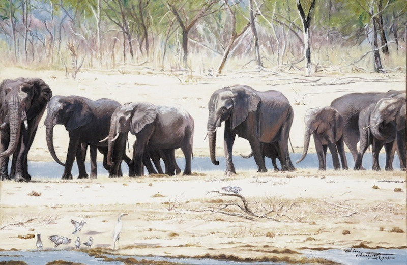Elephants on the March