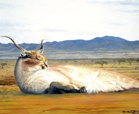 Contented Caracal