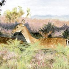 Fallow Deer in the New Forest
