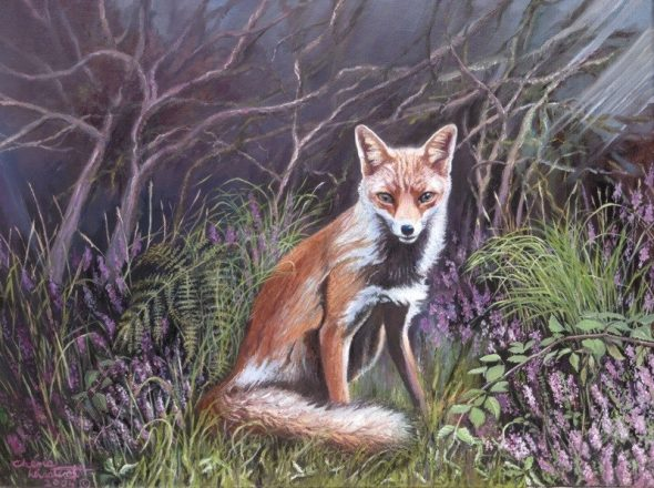 Fox in the Heather