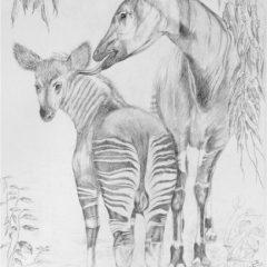 Mother Love (Okapi)