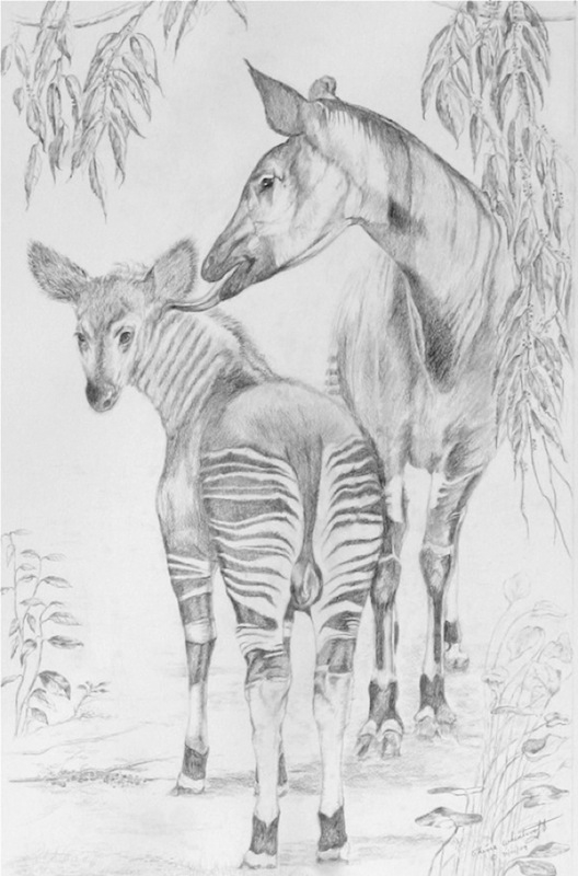 Mother Love (Okapi)