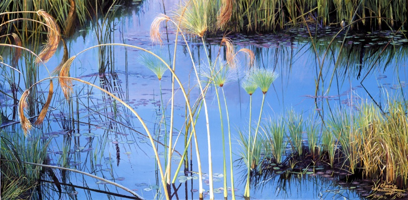 Papyrus of the Okavango Delta