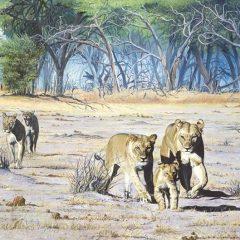 Stragglers of Botswana