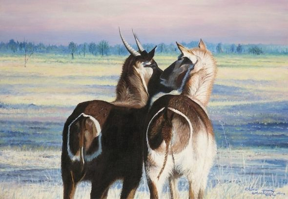Togetherness (Waterbuck)
