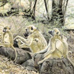 The Trio of Botswana