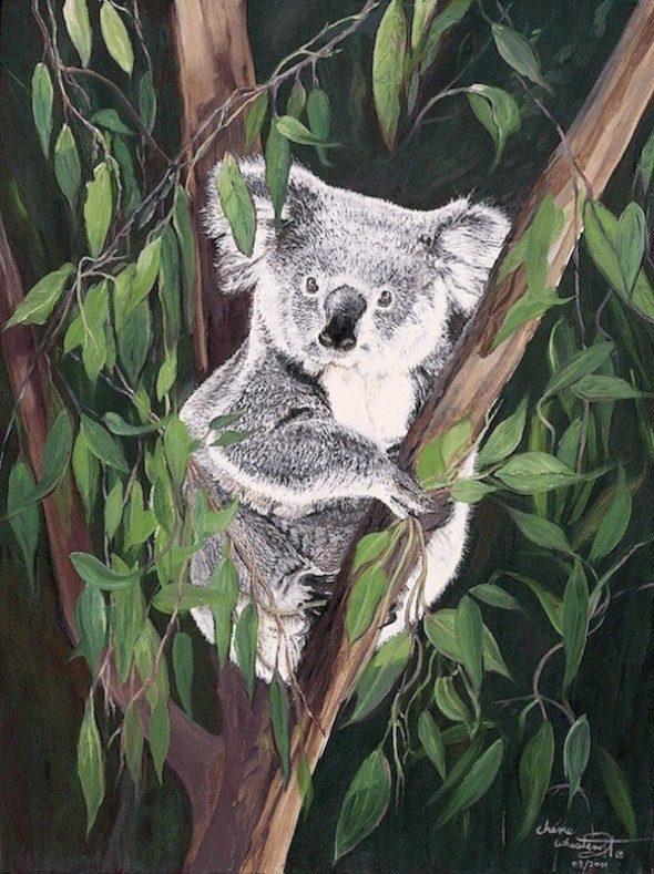 Kelly Koala